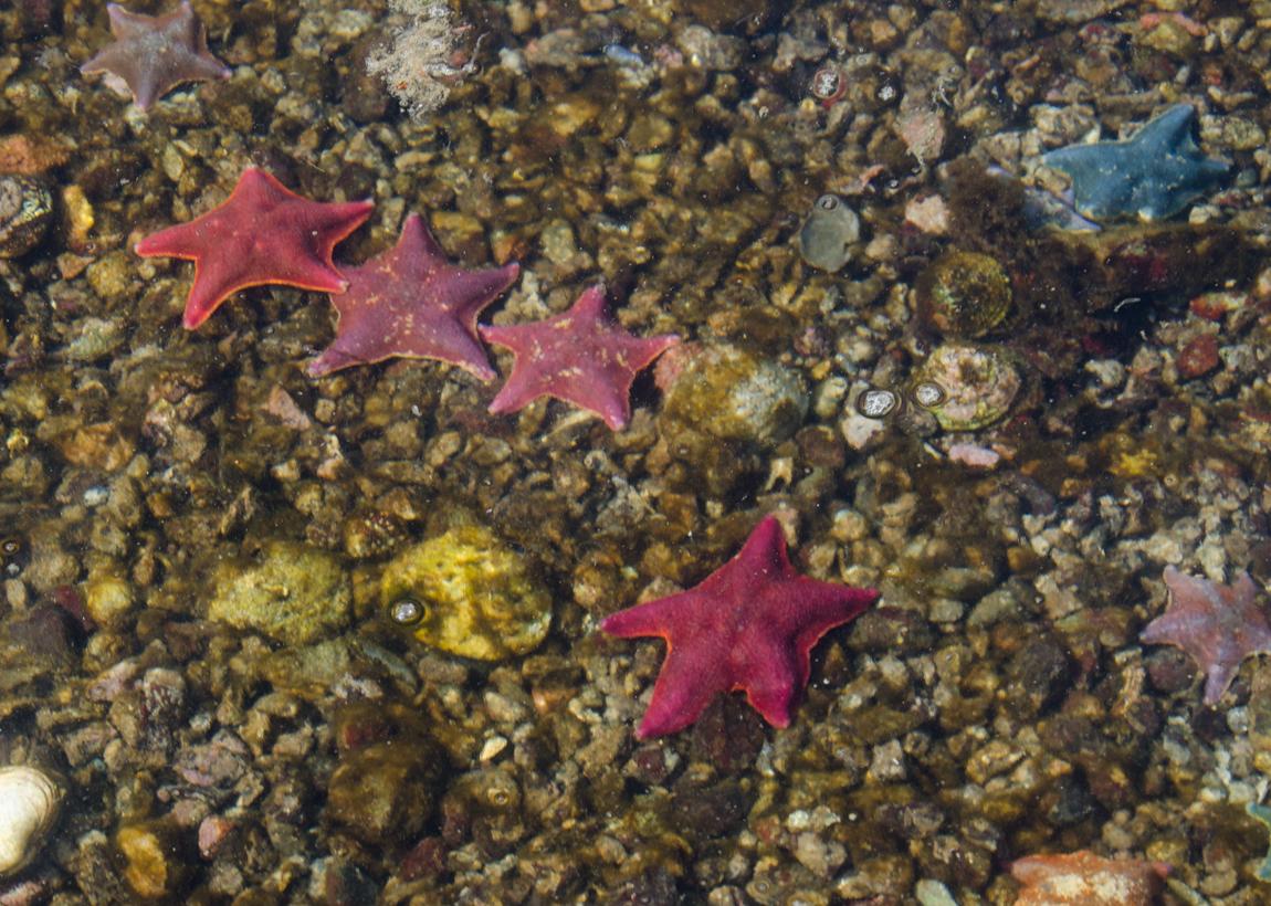 Burnaby Strait, Low Tide - Gwaii Haanas National Park, Haida Gwaii