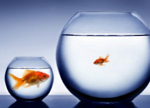 Big Fish, Small Bowl - How To Measure Success